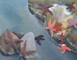 Shennen's Starfish